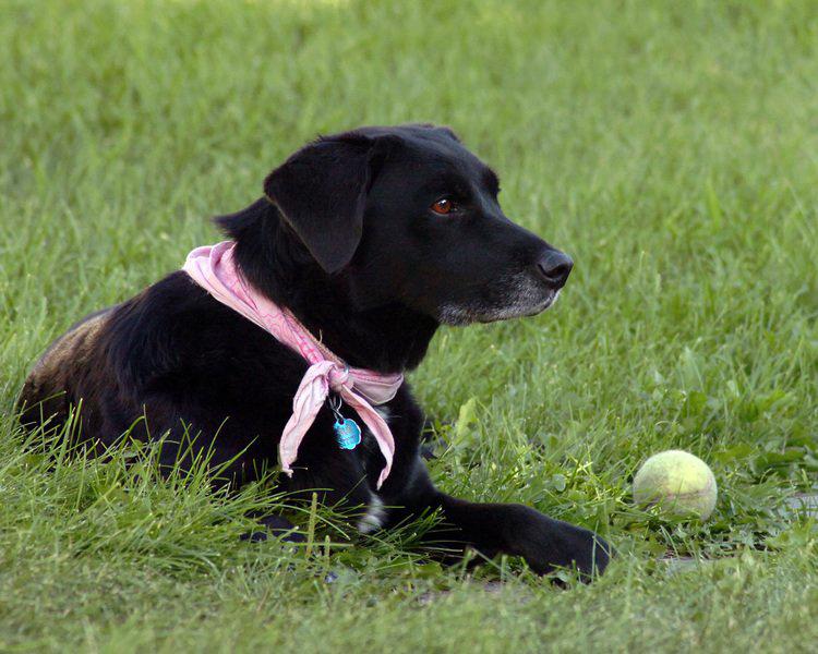 Joy-Canine- Ownership.jpg