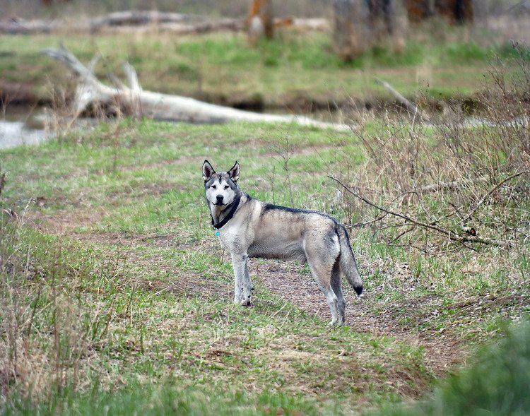 Dog-Friendly-Training.jpg