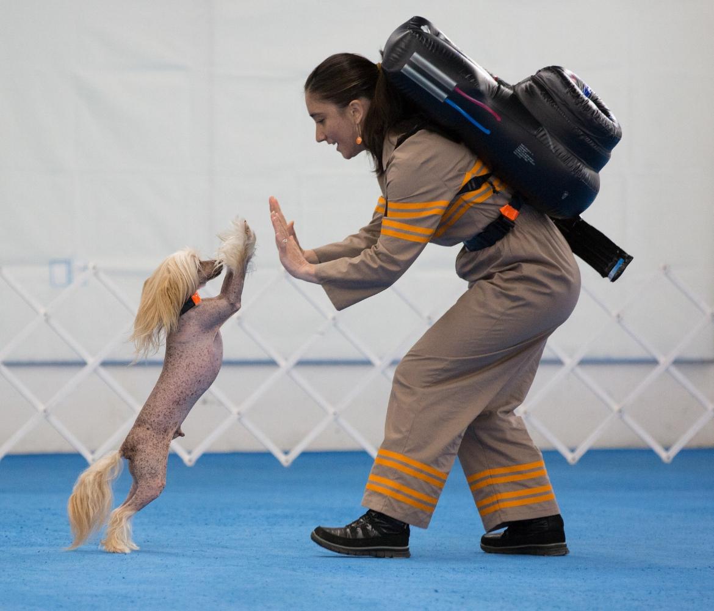 canine musical freestyle training