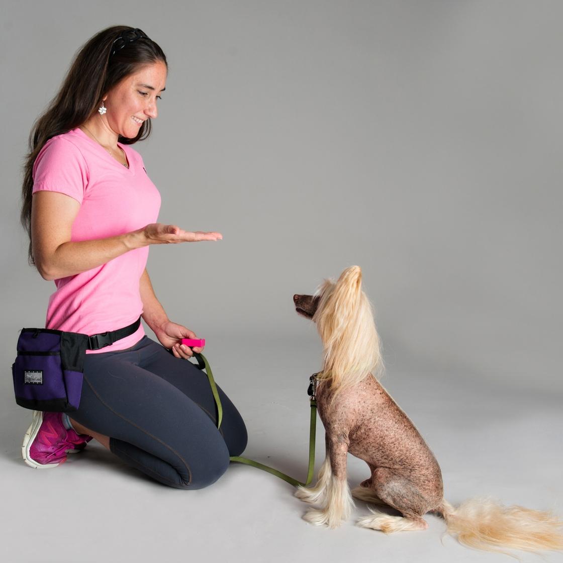 Dog Training Sit Hand Signal