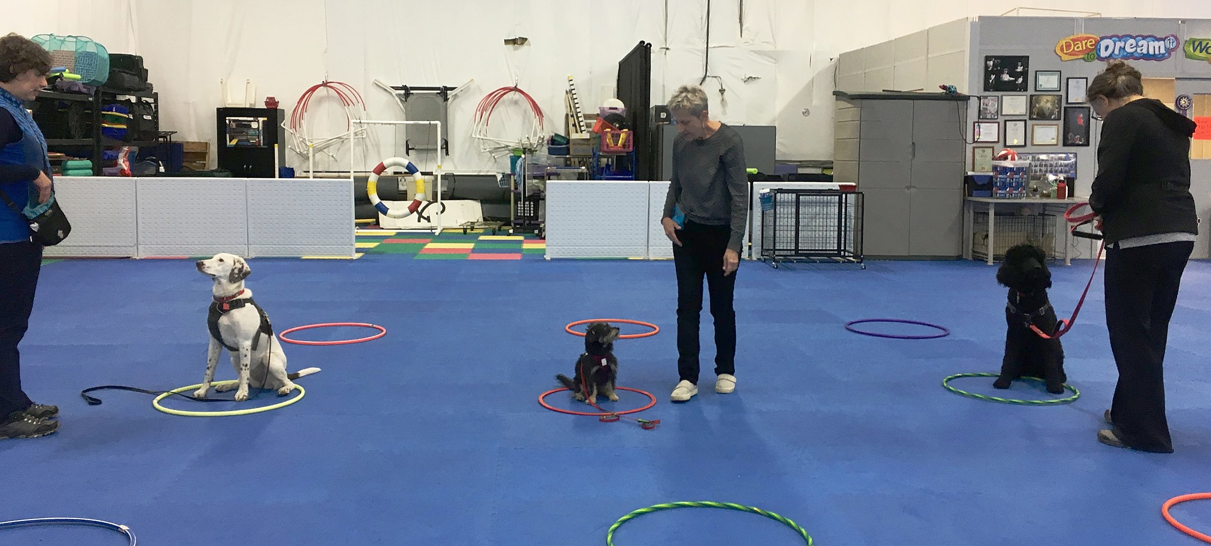 Students at the Performance Annex get their feet wet in my K9 Games class, which is full of challenges.
