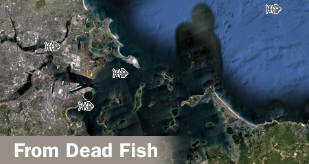 Green_harbors_project_Dead-fish