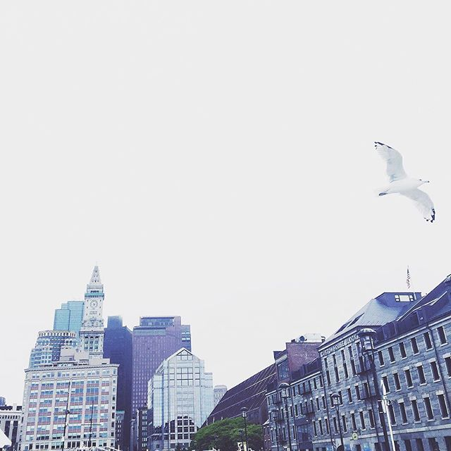 #view #white #flying #bird #old #and #new #building #architecture #sky #lookup