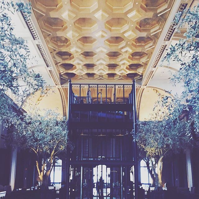 #gold #ceiling #black #steel #olive #trees #art #historic #building #natural #history #museum