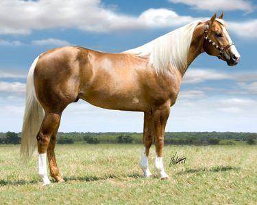 A Living Horse