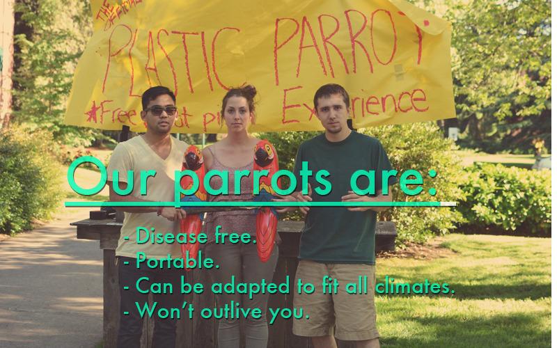 parrotdeck3.jpg