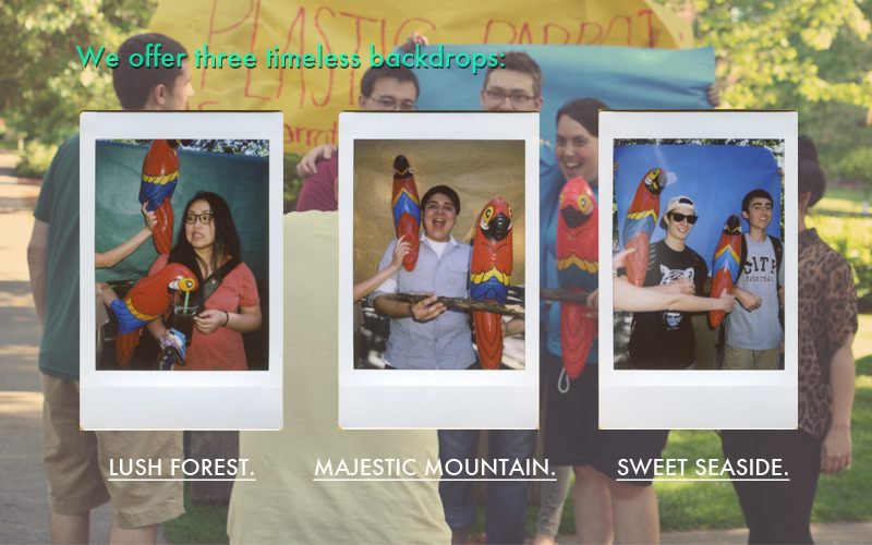 parrotdeck5.jpg