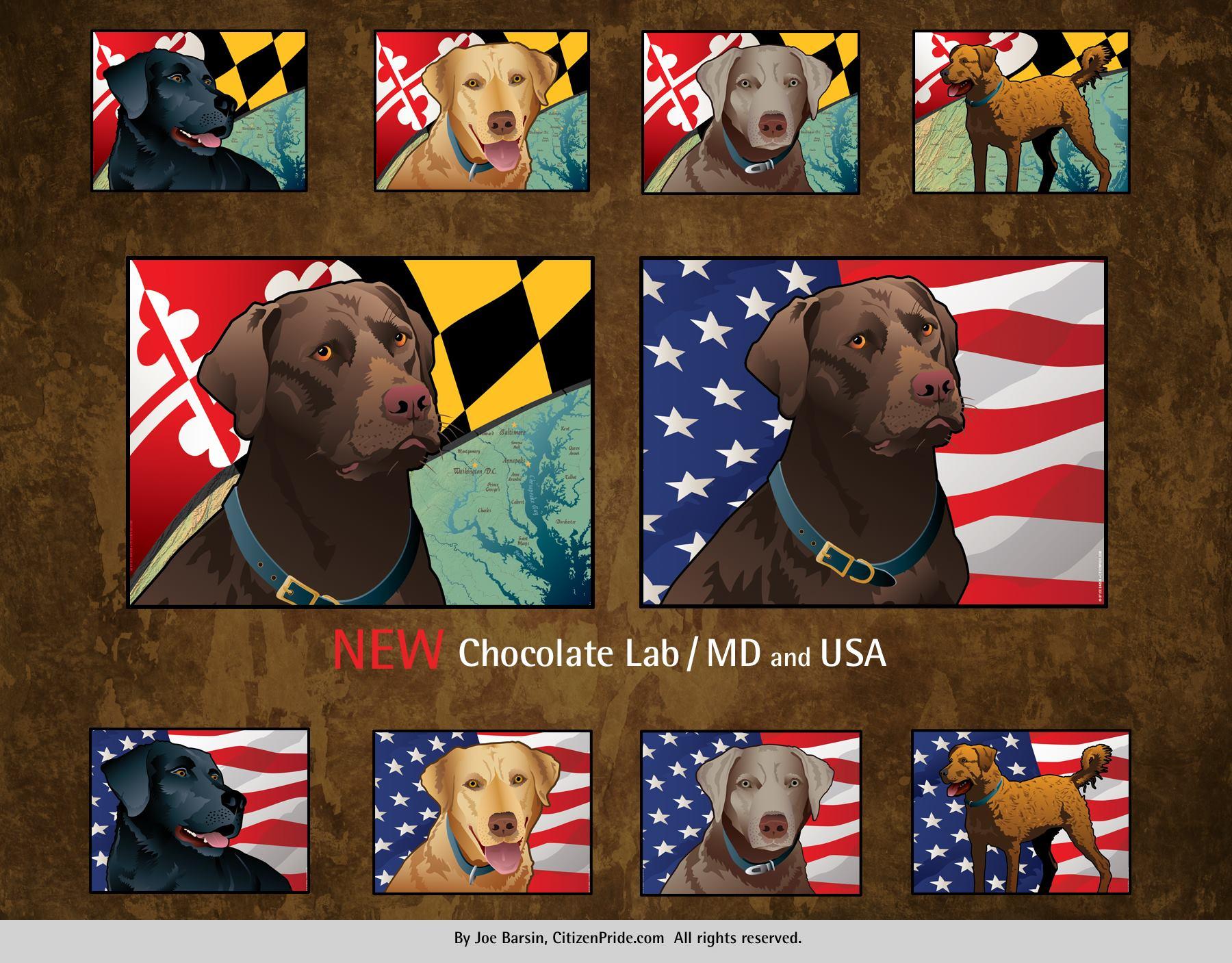 Chocolate lab citizen pride.jpg