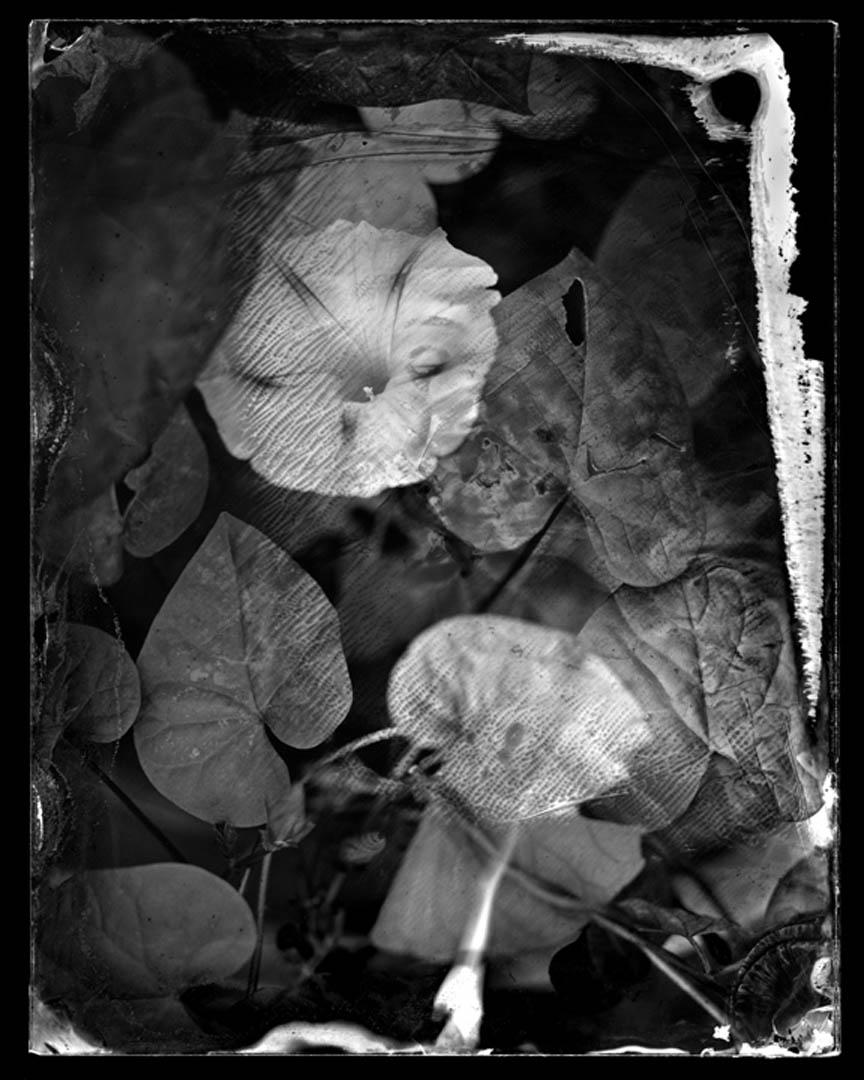1.13 Deep Blue Flower.jpg