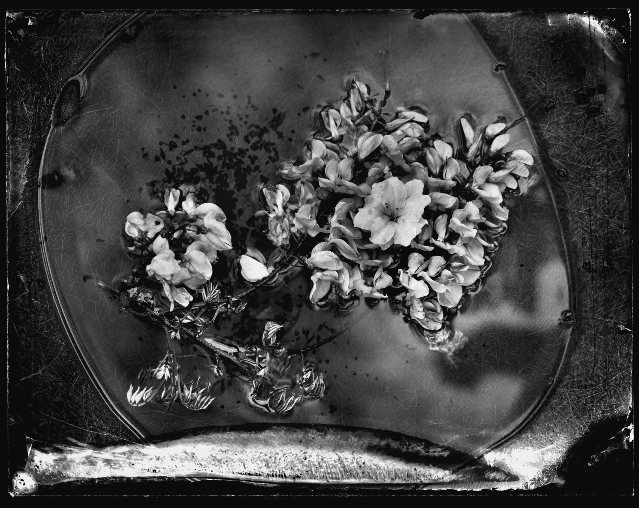 9. Eames Flowers.jpg