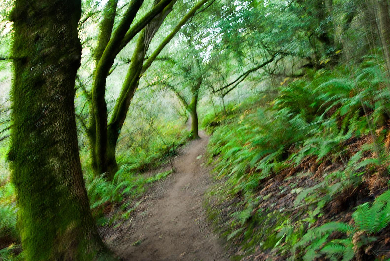 Las Trancas Wood, Palo Alto, CA