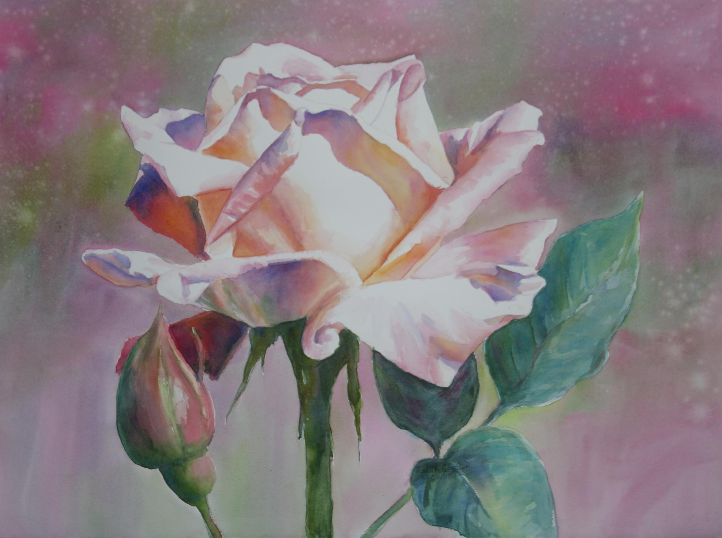 Summer's First Rose