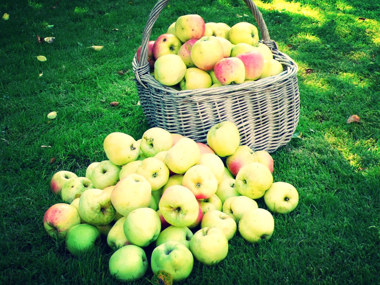 Æbler fra haven