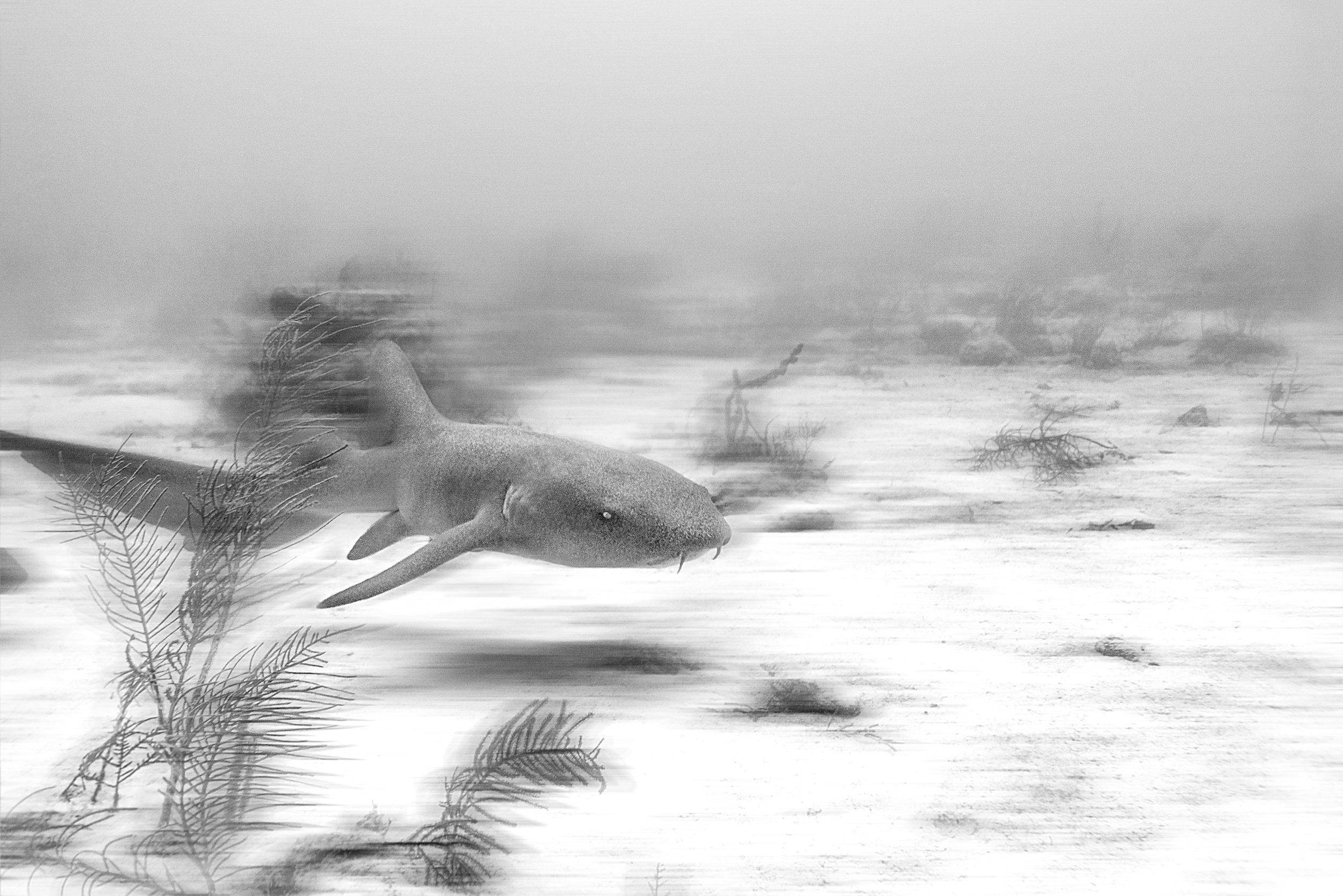 Shark1.jpg