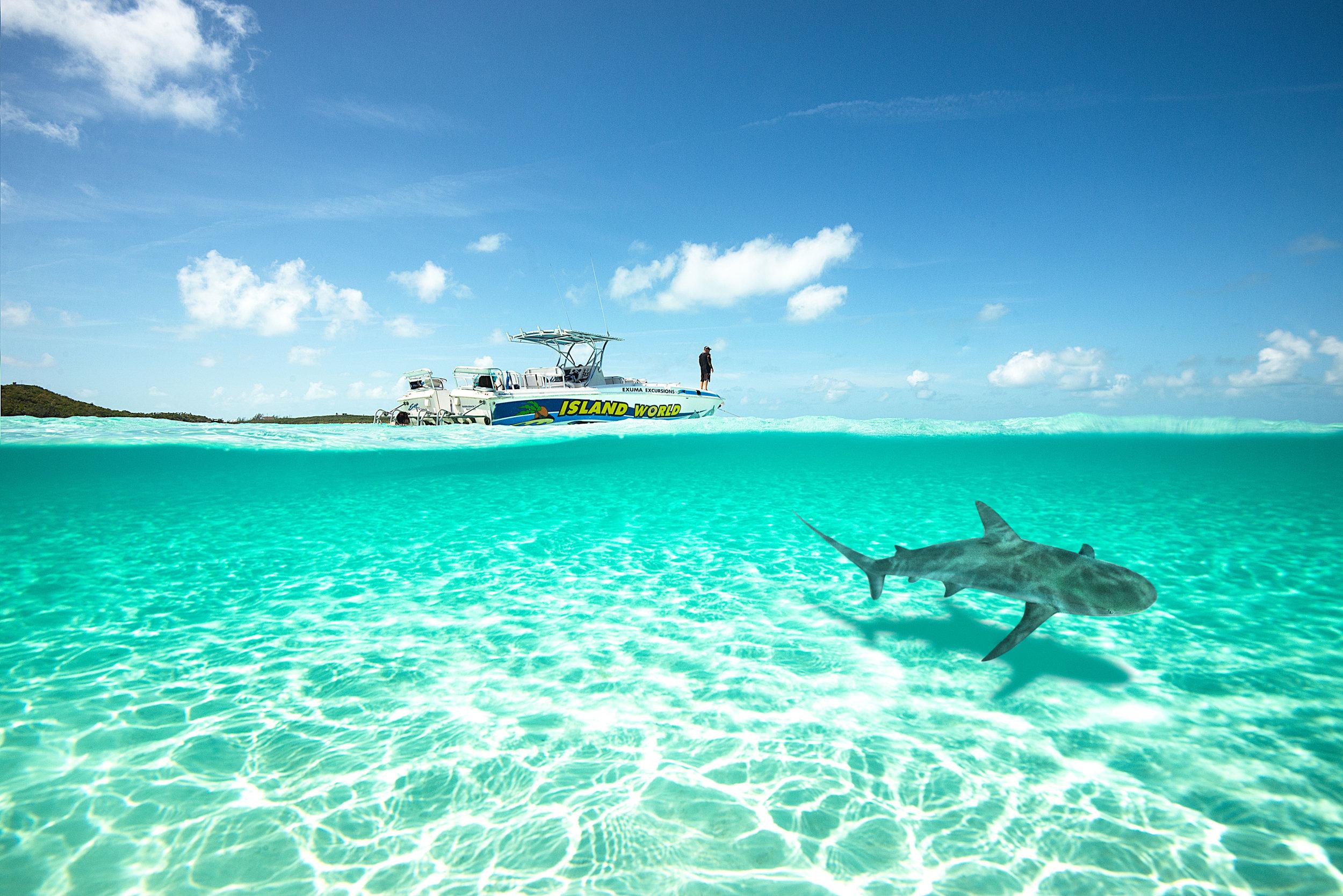 BahamasBoatShark.jpg