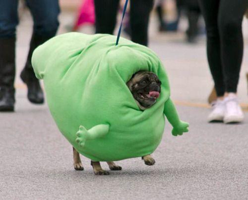 43af00b5414bb5e09824180ad6f45883--funny-halloween-costumes-dog-costumes.jpg