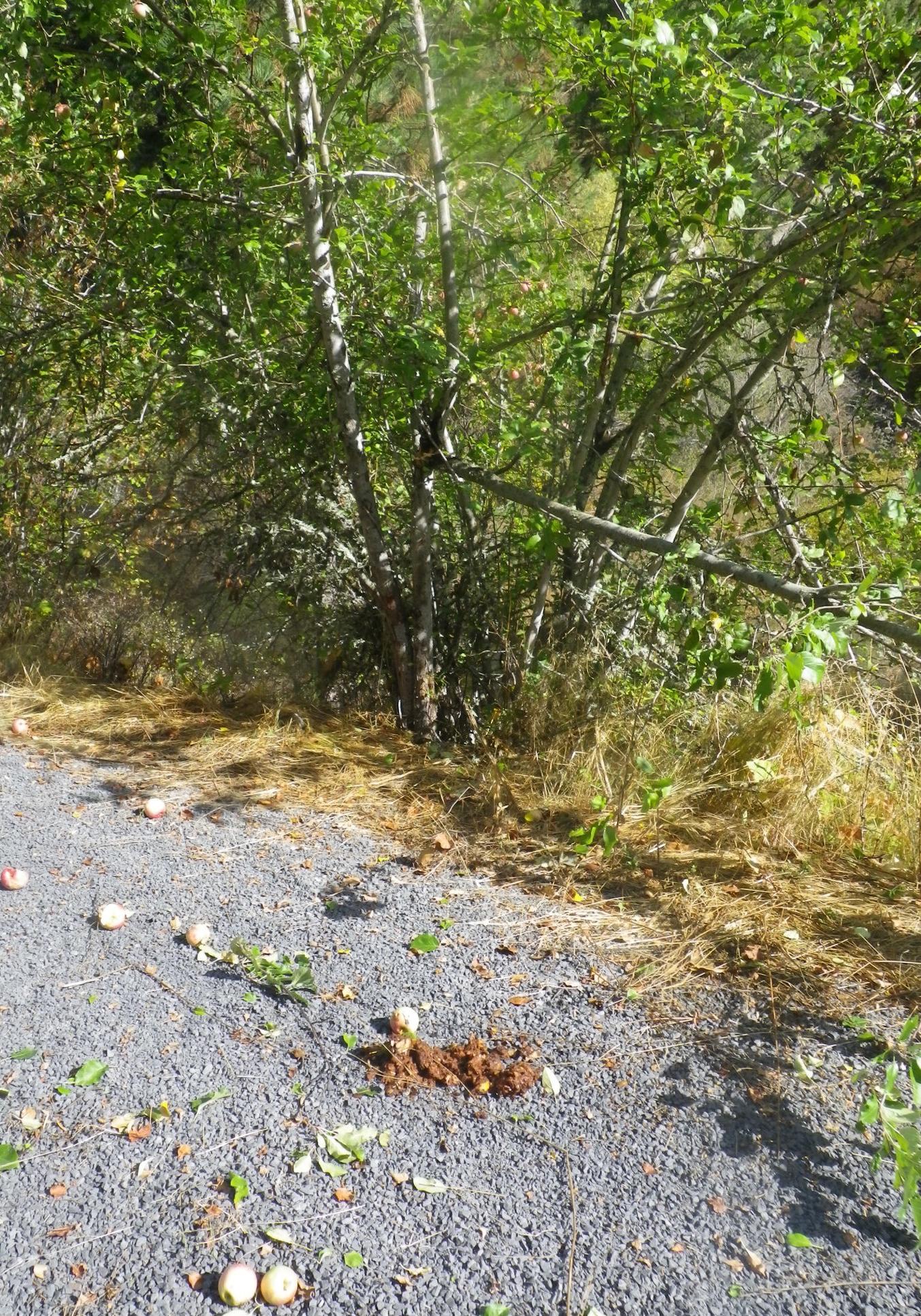Troy RAil Trail 008.JPG