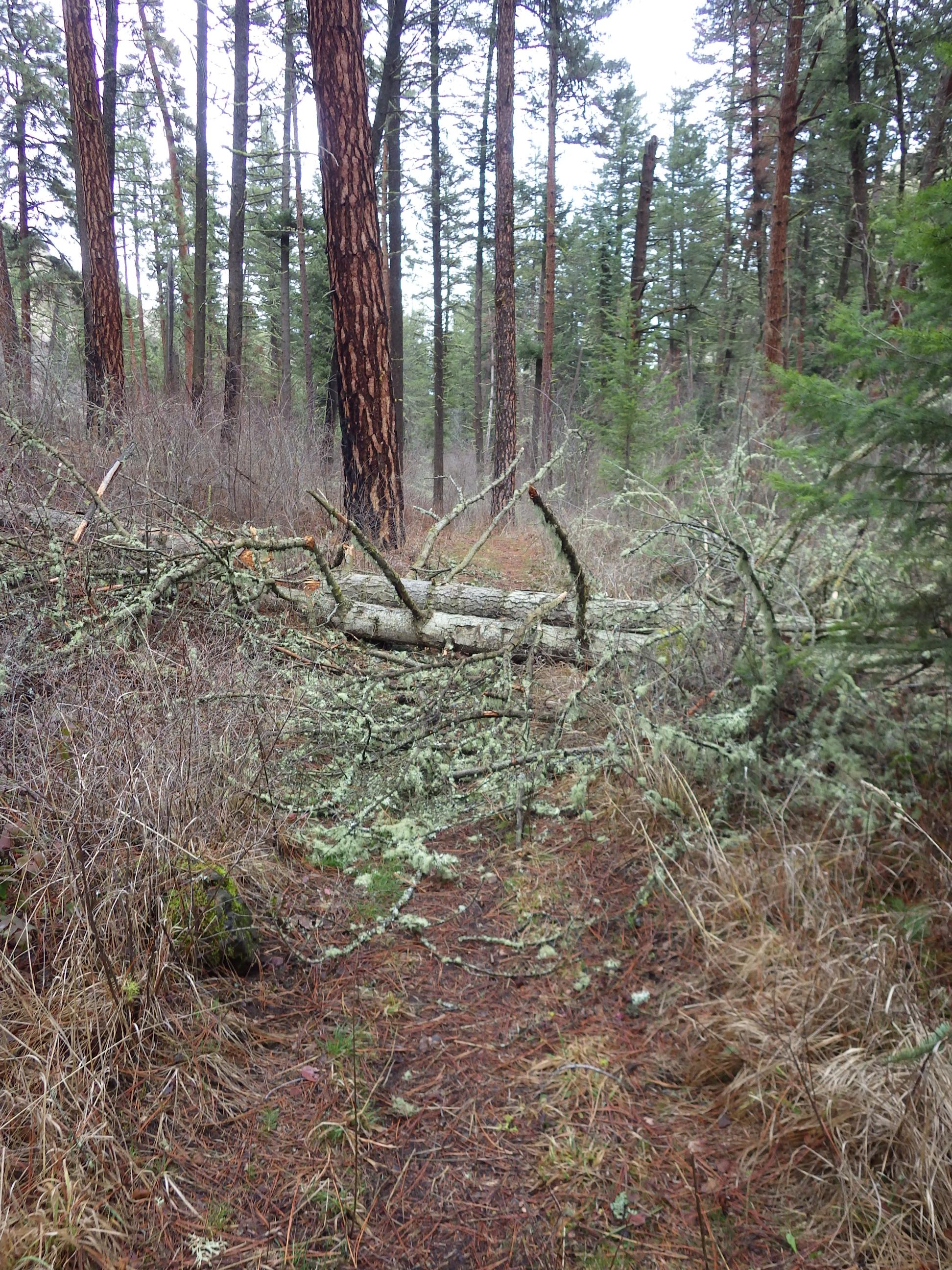 Trail hurdle. Lots of deadfall up-trail