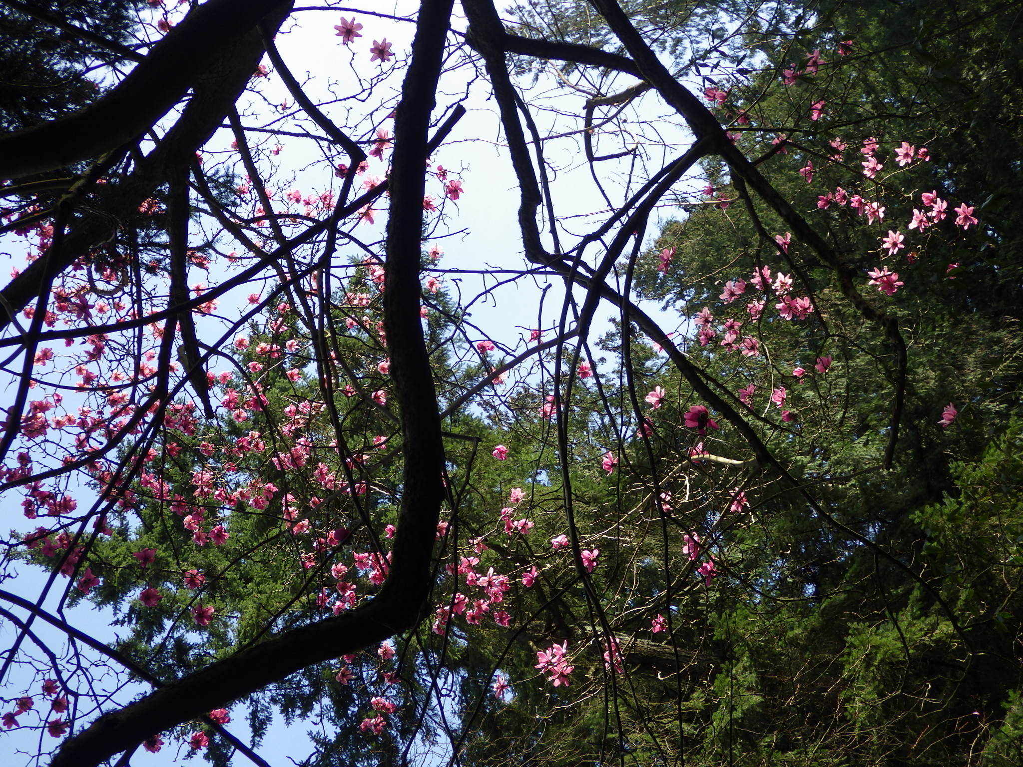 Flowers floating in the upper canopy . . .