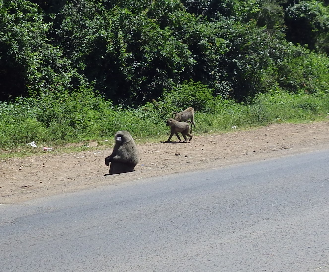 As I mentioned, I came across a troop of baboons on the way to lunch. When I'm out walking, I'm carrying my work camera. It's nearly indestructible and takes pretty competent pictures.