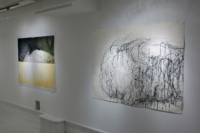 Shanna Maurizi, installation view