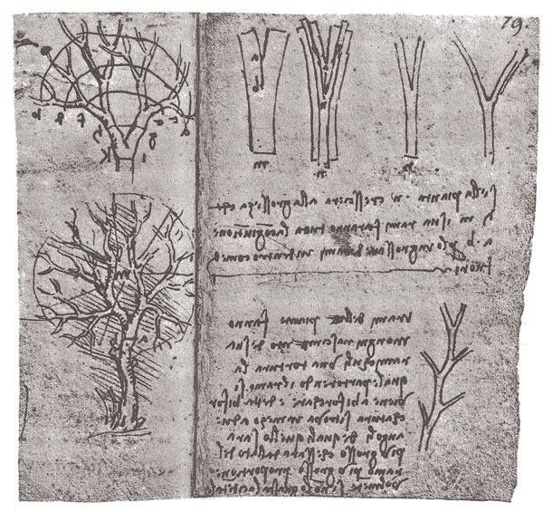 'Tree Branching' by Leonardo da Vinci (ca. 1515)  from      The Book of Trees: Visualizing Branches of Knowledge ,  Manuel Lima