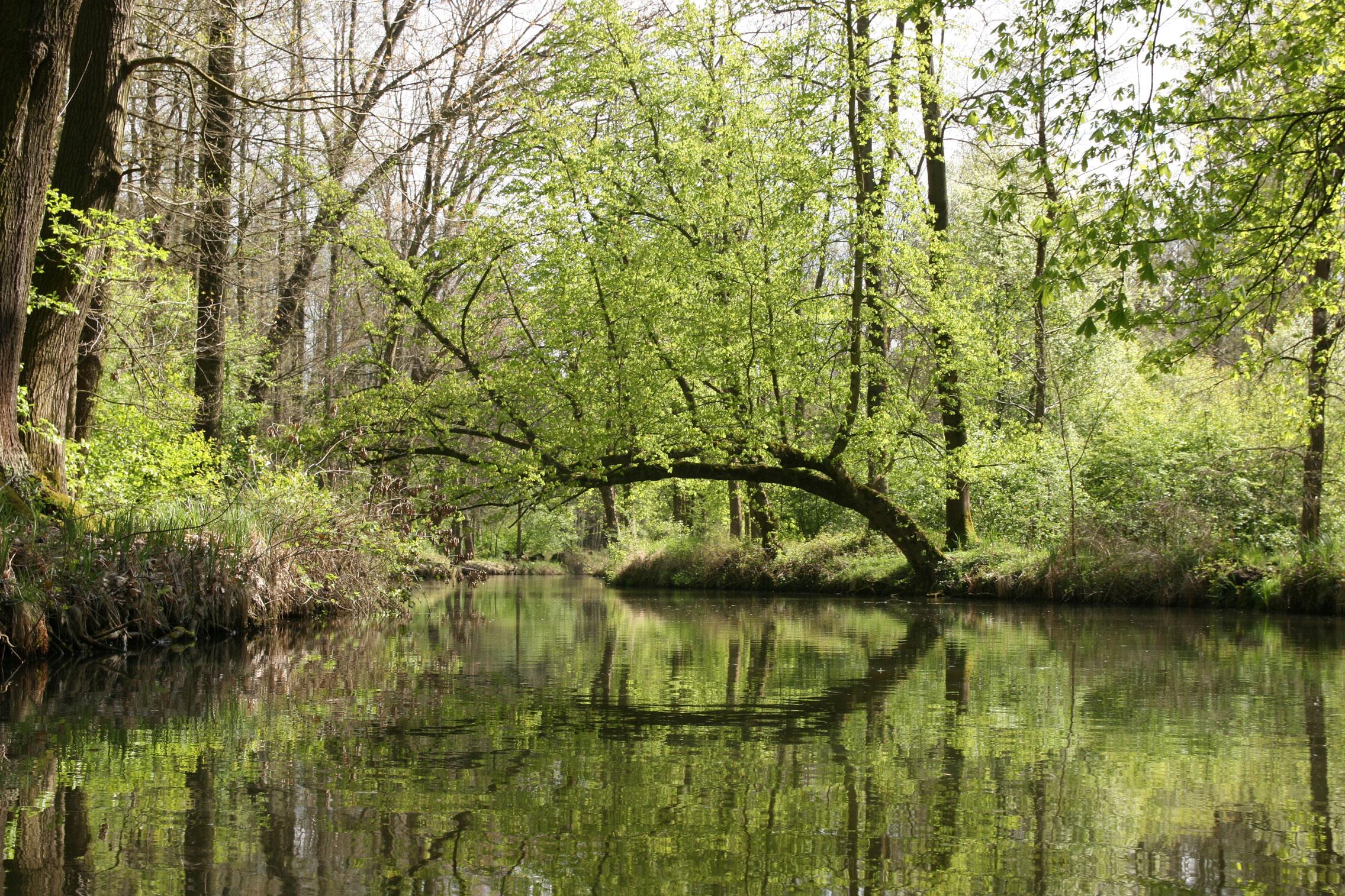 Frühling - Gerade der Frühling ist für Naturliebhaber reizvoll. Die Wiesen sind bis Anfang April überschwemmt und die Wälder sind ohne Blätter besonders tief einsehbar. Vögel lassen sich gut beobachten. Absolut herrlich wird es auch, wenn die Blätter aus den Knospen brechen oder die Sumpfdotterblumen blühen.