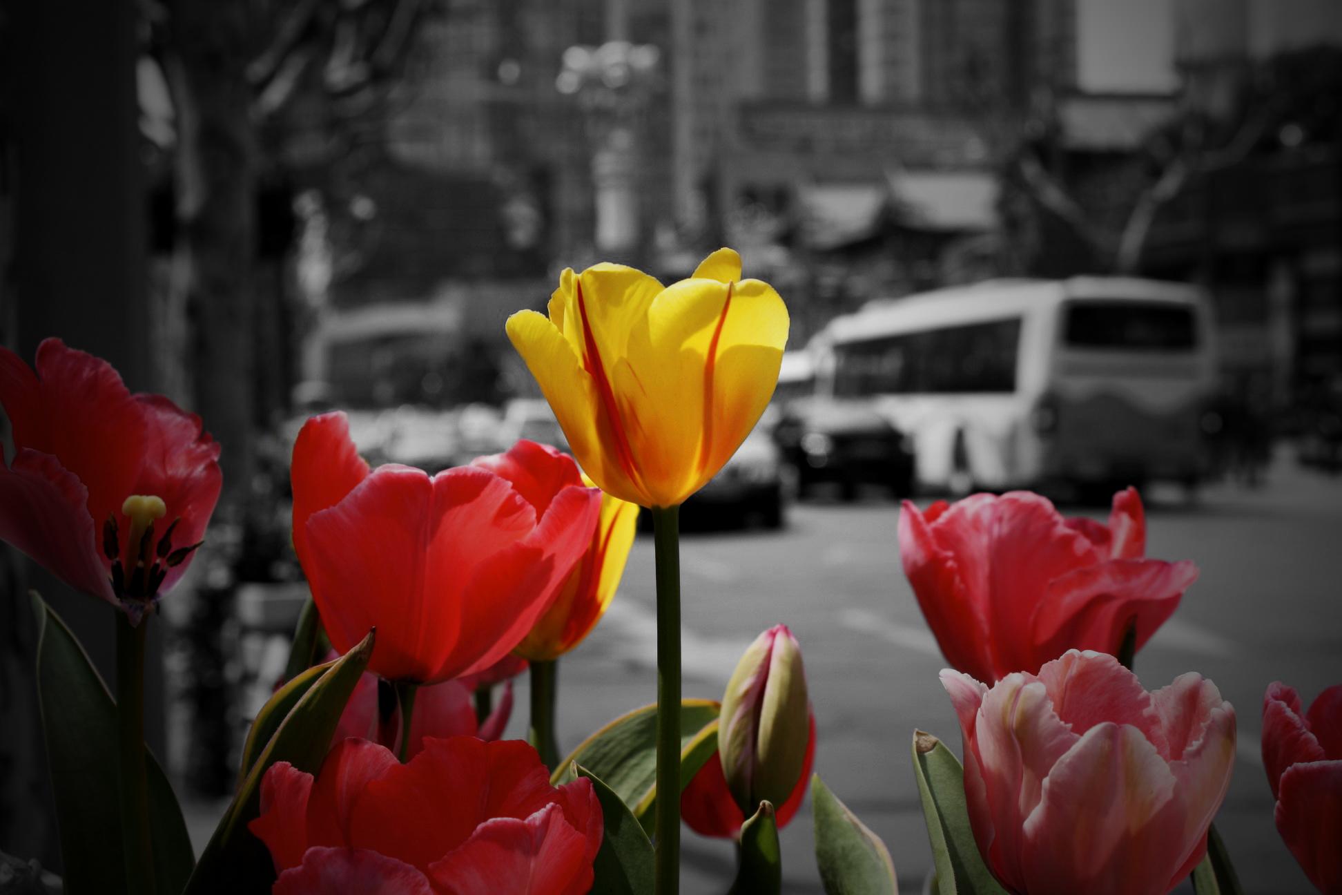 Shanghai Flowers.jpg