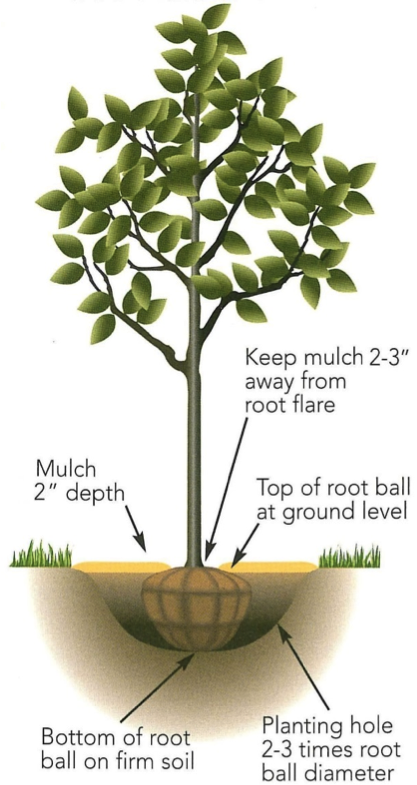 Tree planting Picture.png