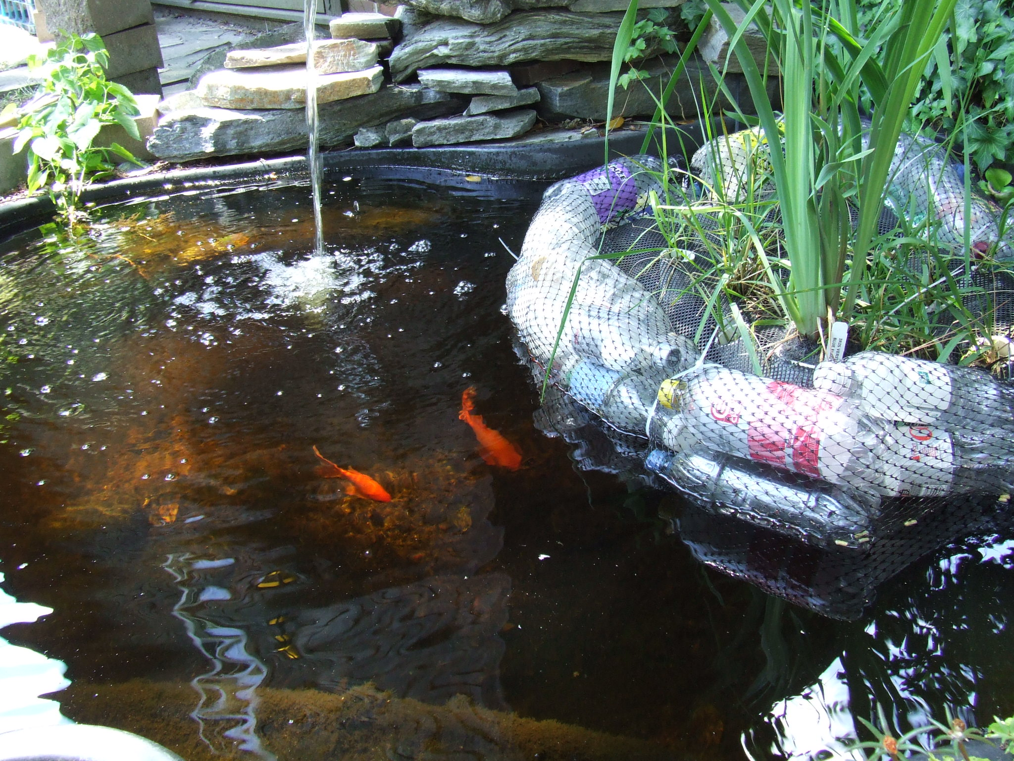 Habitat for fish.JPG