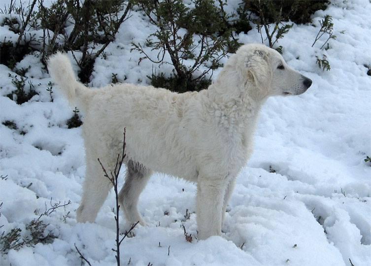Roicas första snö.