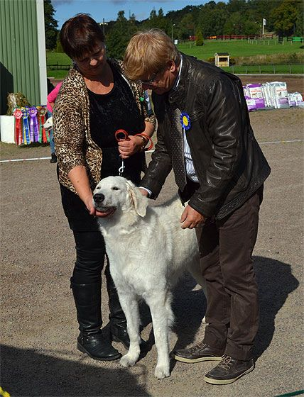 Roica's last dog show, Åstorp, 2015-09-19. With her in the picture is Silvana and judge Leif Ragnar Hjorth.