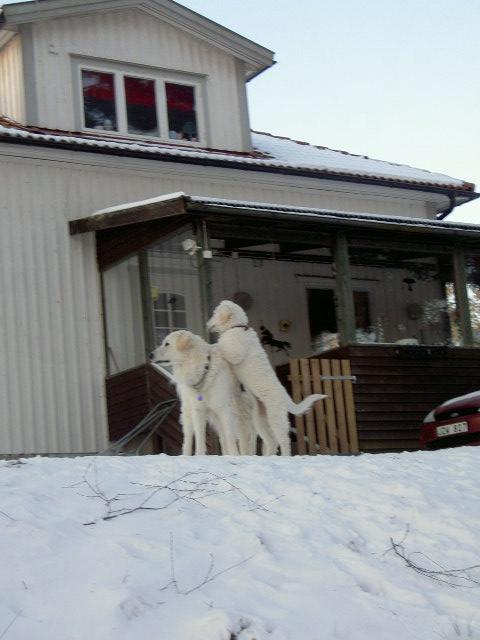 Länsman and Tassa.