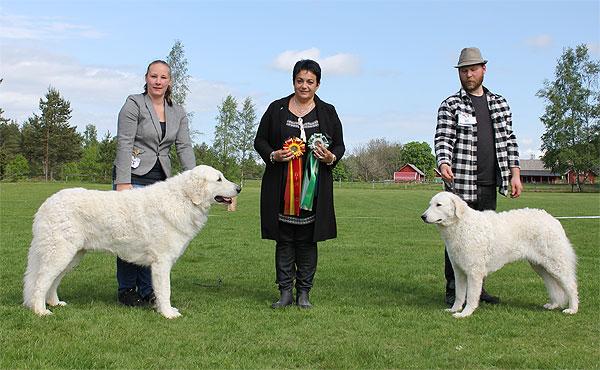 BOB Sorschies Szép Jenci & BOS Czaruso Coldblow Jules. Photo: SvKK.