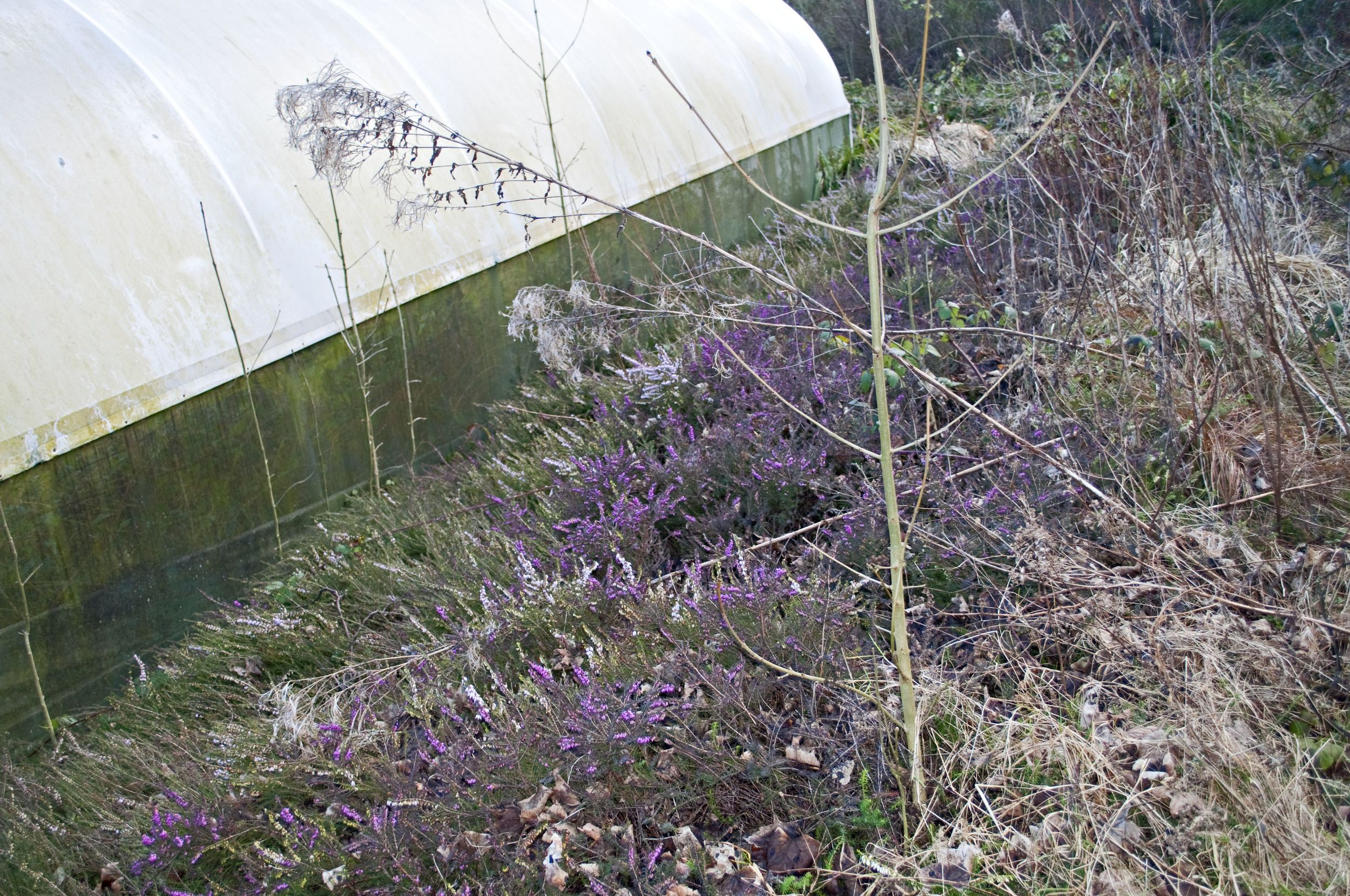 The heather bed