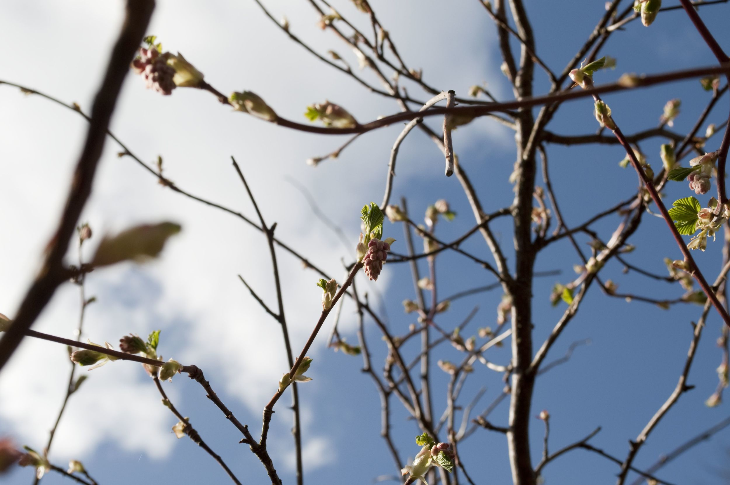 Blossom on the way