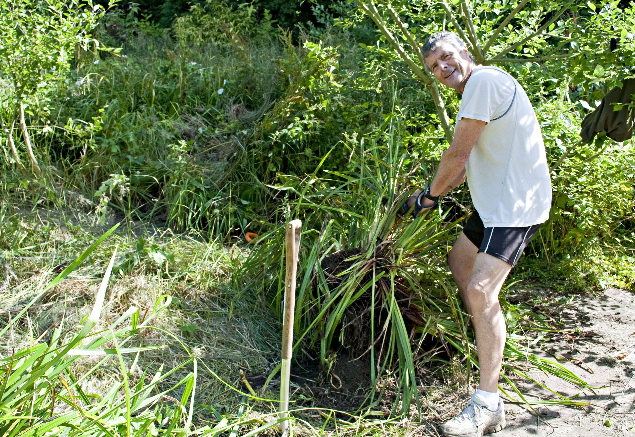 Dunc's dad getting stuck into helping us clear brambles and sedge for or veggie patch