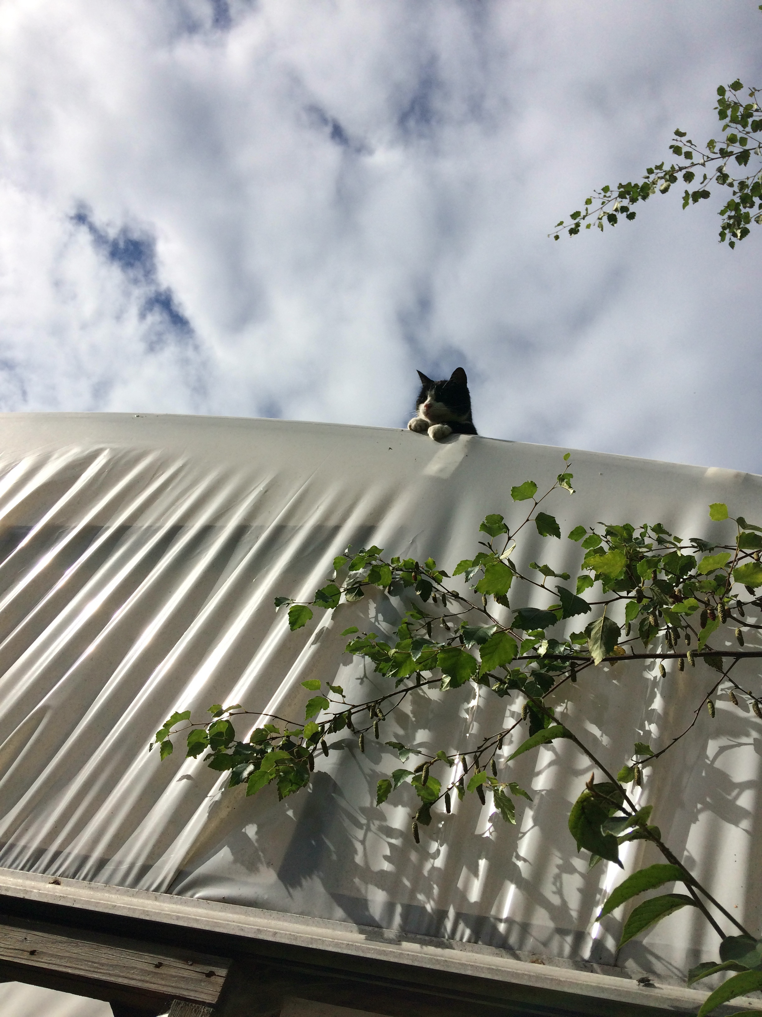 The Polytunnel Watchman