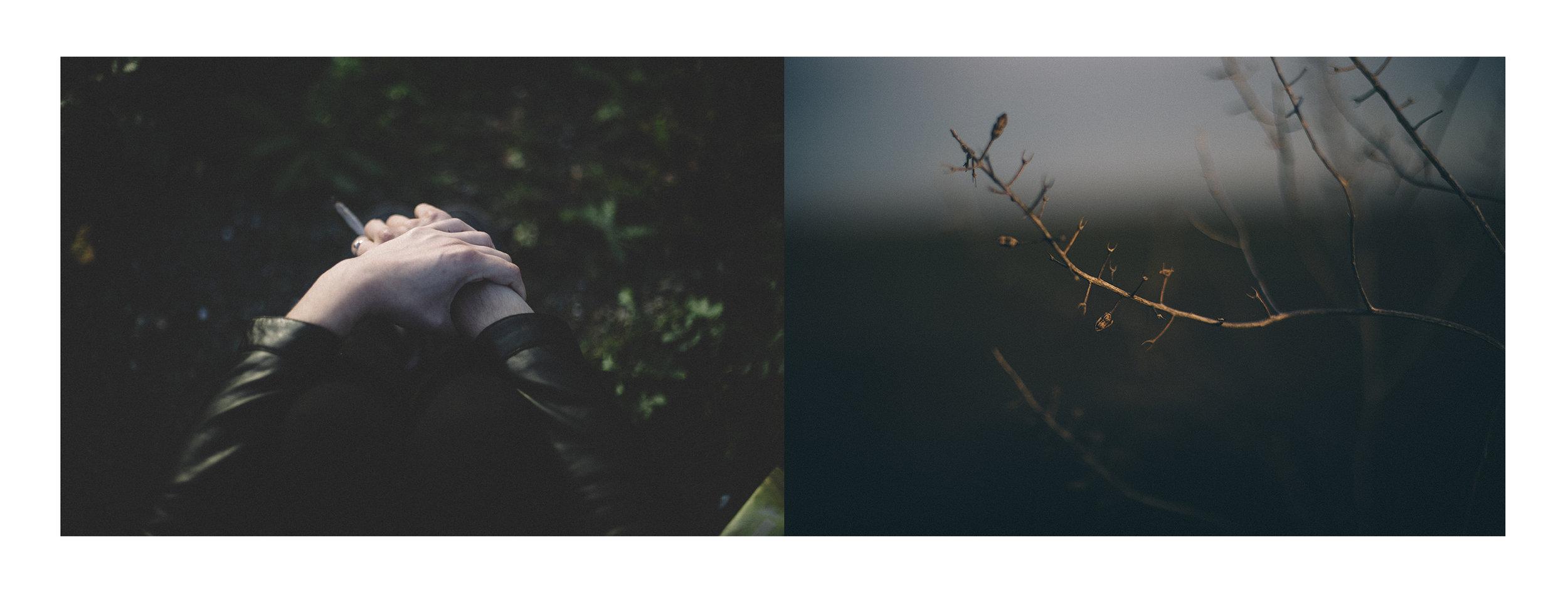 Mano y rama