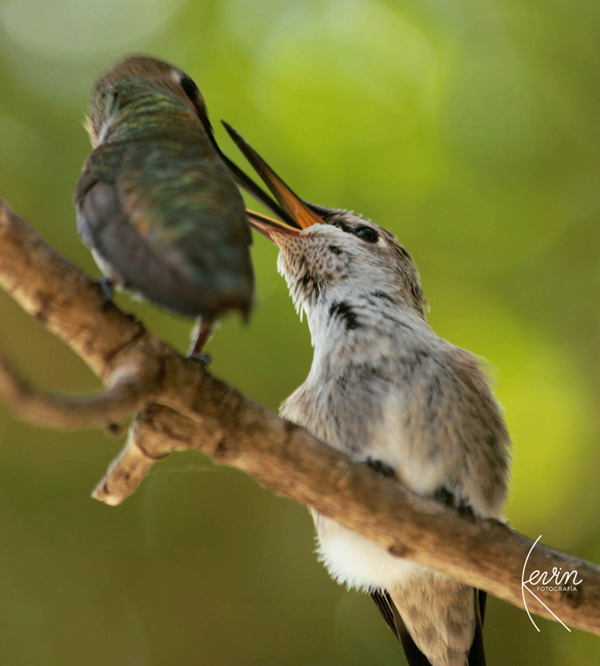 """""""Birds"""" by Kevin"""