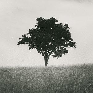 tree_thumb.jpg