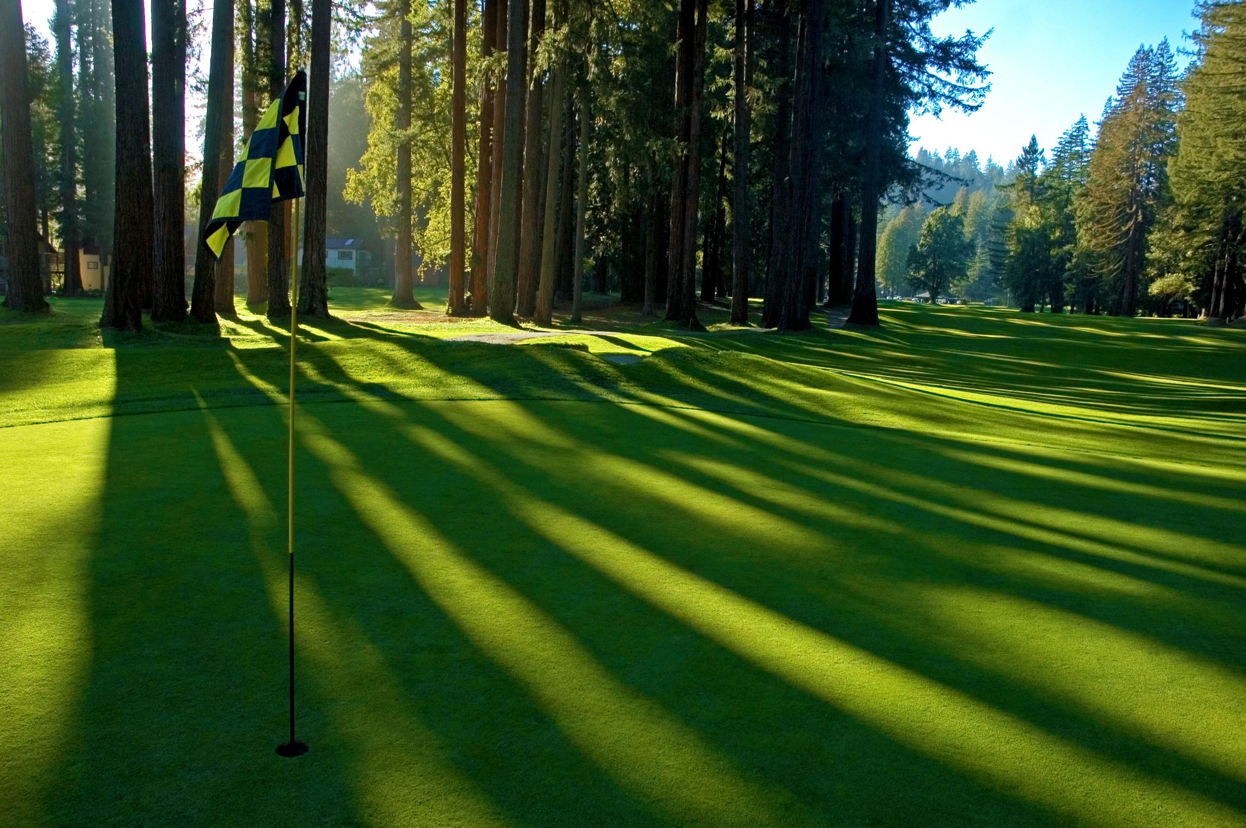 Giant Redwoods cast long shadows down the entire 381-yard, par 4, 7th fairway. © Robert Kaufman