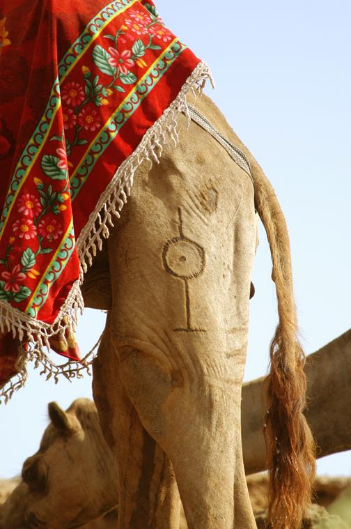 eritrea camel tatoo.jpg