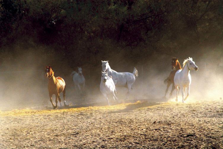 horses dust run.jpg