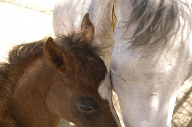 horses foal and mother better.jpg