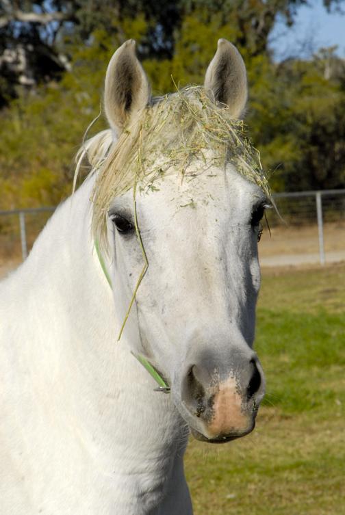 horses santa lucia de al marah.jpg