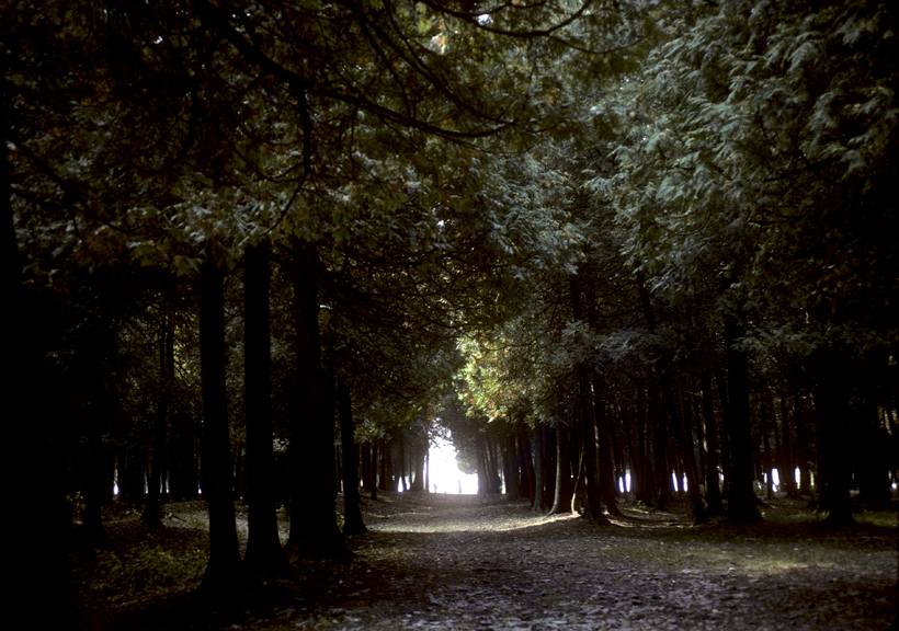 forest door county.jpg