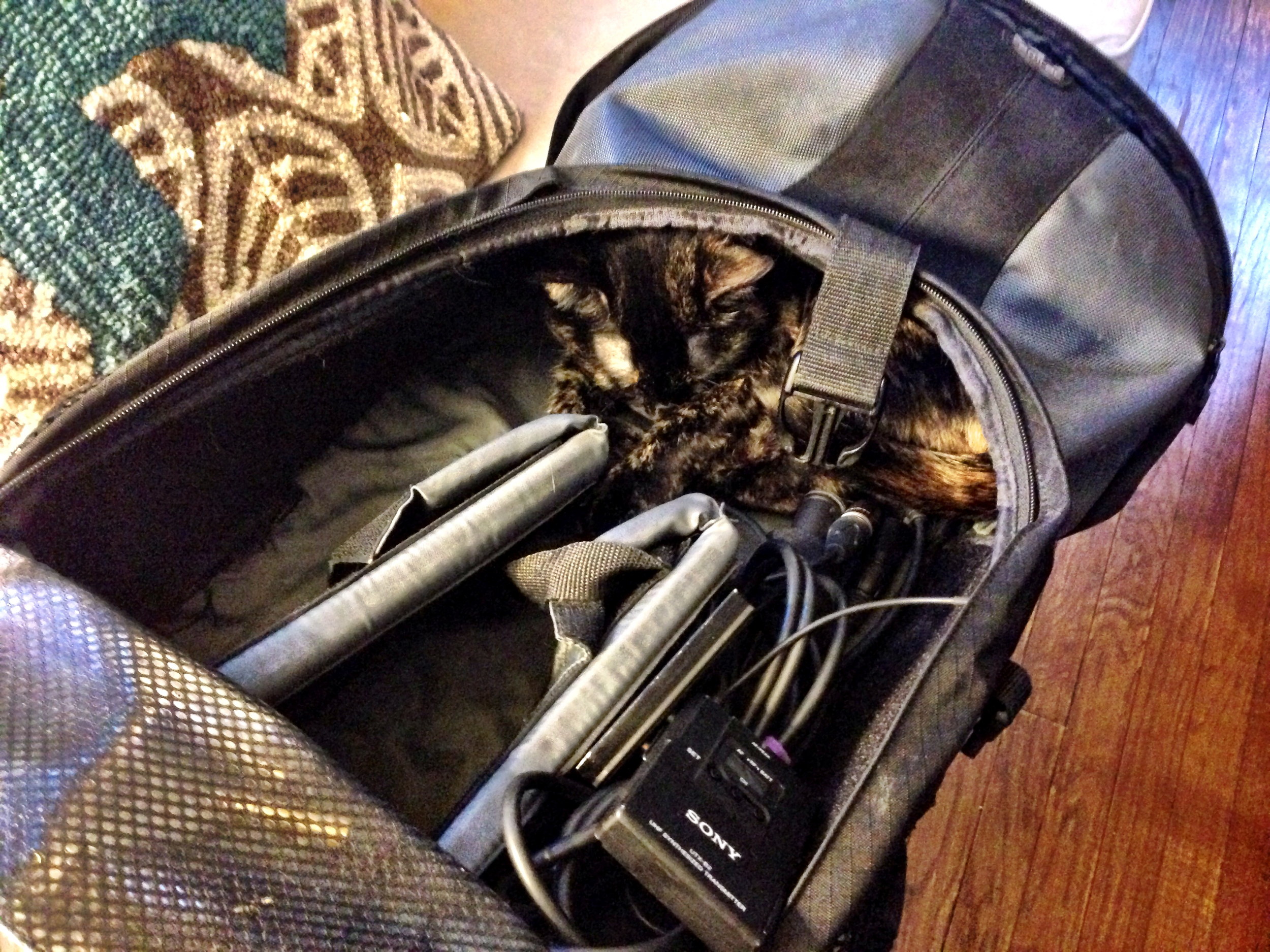 travel essentials - cat!