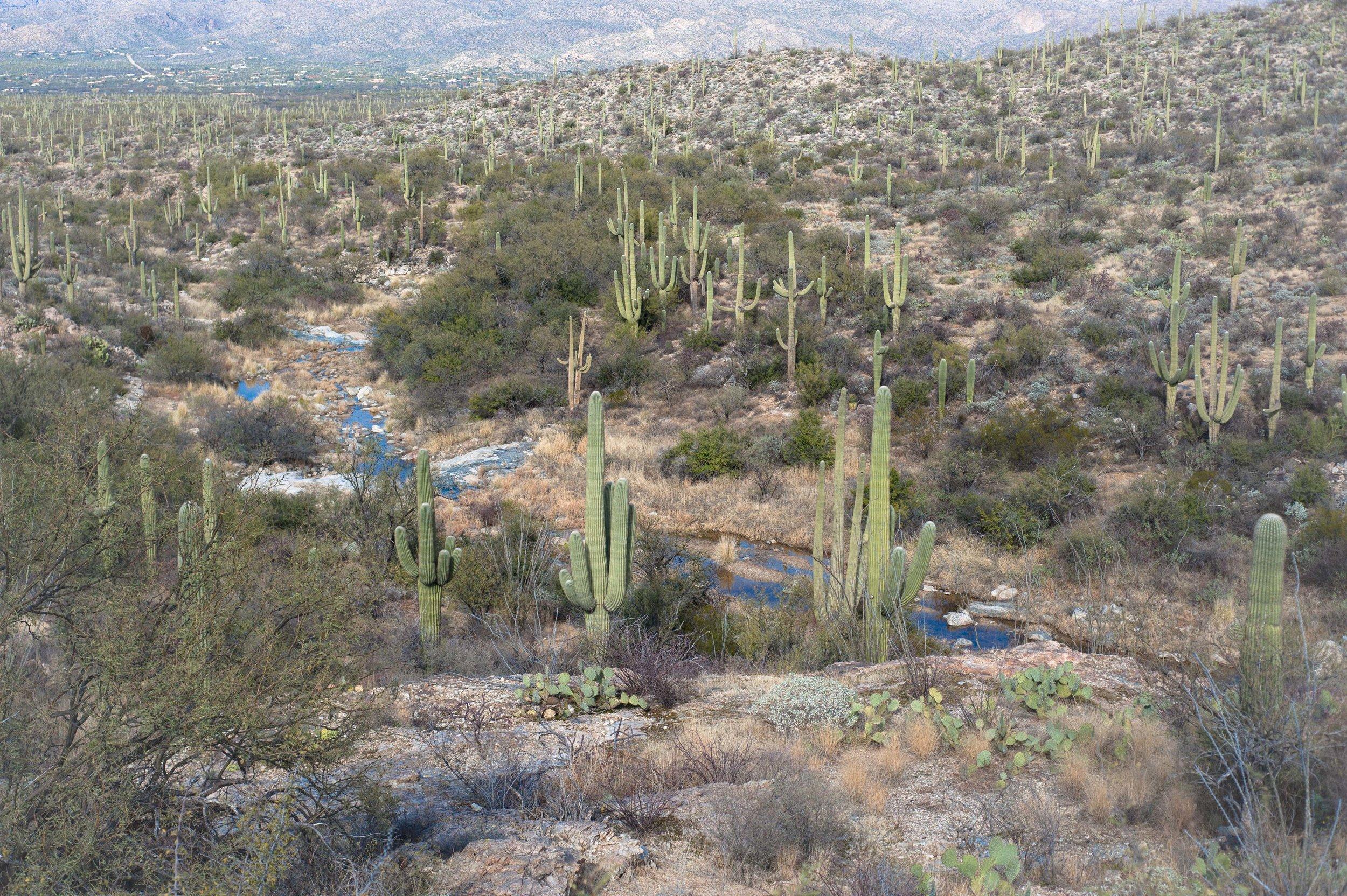 cassandra_artprints_saguaro-6.jpg