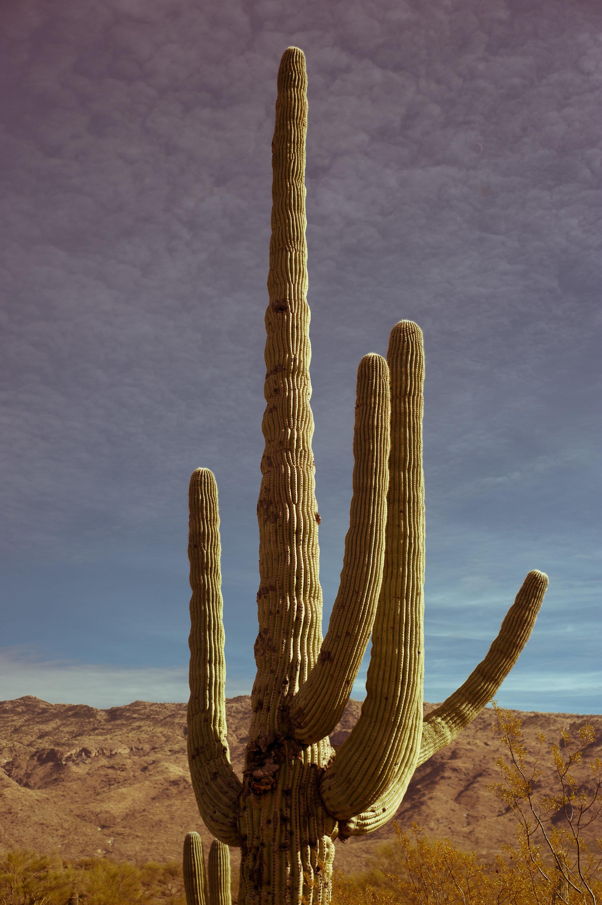 cassandra_artprints_saguaro-8.jpg